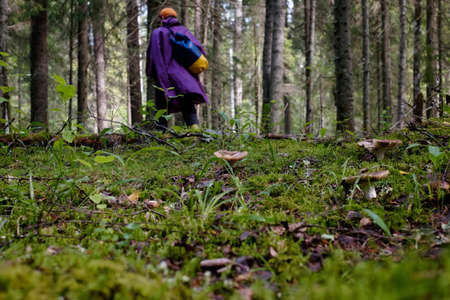 Man walking in forest. Mushrooms on ground.