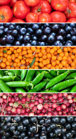 Collage of tomato, peas, lingonberry, black currant and sea buckthorn harvest at autumn.