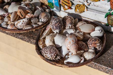 saltwater pearl: seashell shellfish souvenirs summer hollidays