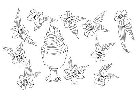 hand drawn tasty vanilla ice cream with vanilla flowers and leaves vector illustration