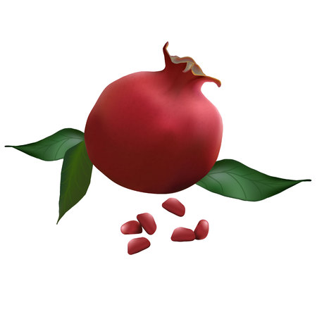 pomegranate realistic with leaves vector illustration
