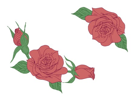Red rose with green leaves hand drawn illustration Illustration