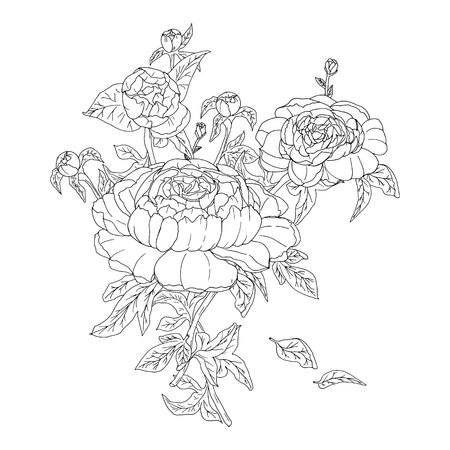 hand drawn peonies with leaves buttons for coloring vector illustration