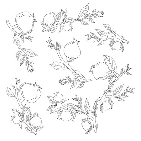 Hand drawn monochrome pomegranates for colored book isolated elements vector illustration