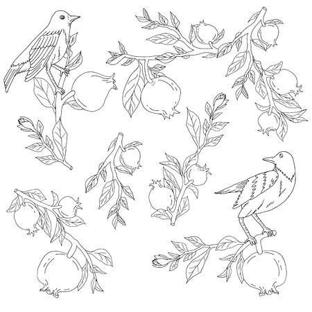 Hand drawn nightingales in pomegranates tree branches for coloring