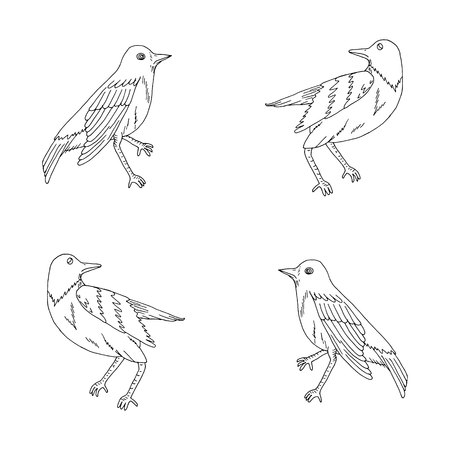 Hand drawn nightingales for coloring Illustration