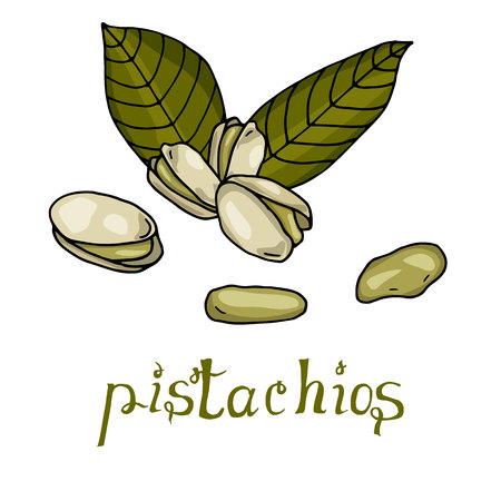 Pistachios hand drawn vector illustration with lettering Illustration