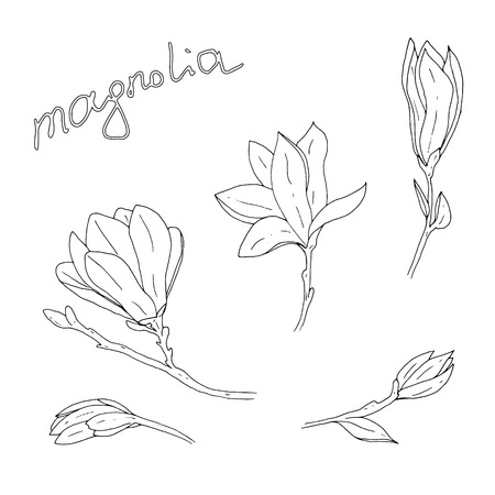 Handgezeichnete Magnolienblume mit Zweigen und Blättern und Beschriftungsvektorillustration Vektorgrafik