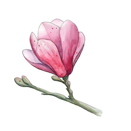 Watercolor magnolia flower with branch illustration