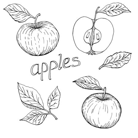 Hand drawn apples monochrome set of elements with leaves and lettering vector illustration Çizim