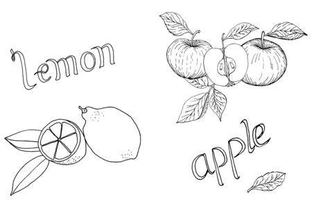 Hand drawn apples and lemons monochrome set of elements with leaves and lettering vector illustration