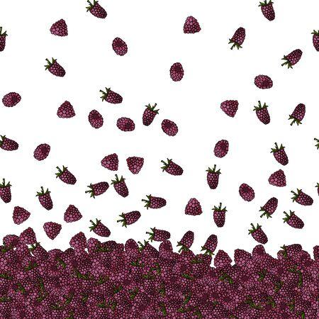 raspberries illustration Stock Photo