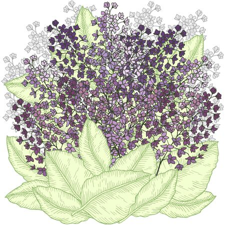 Hand drawn floral bouquet with lilac and leaves colored vector illustration