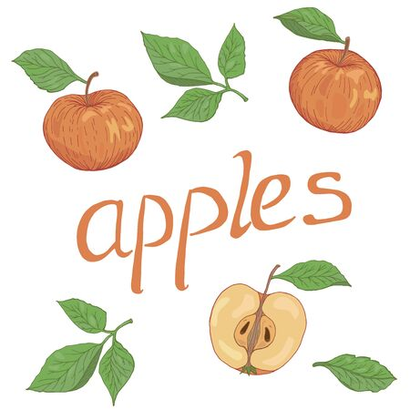 Hand drawn apples colored set of elements with leaves and lettering vector illustration Çizim