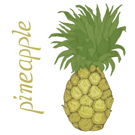 Hand drawn pineapple with leaves and lettering vector illustration