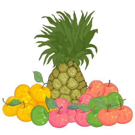 Hand drawn fruits pineapple red green yellow apples vector illustration