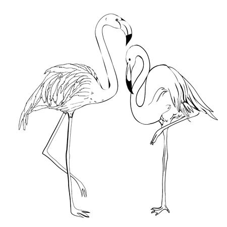 Illustrazione vettoriale fenicottero. Stile Doodle. Isolato su sfondo bianco Archivio Fotografico - 88218583