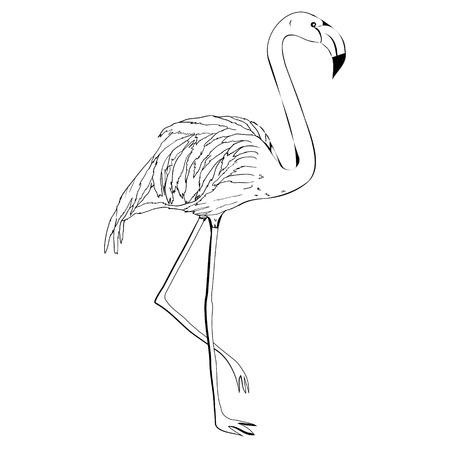 Flamingo hand tekenen Stock Illustratie