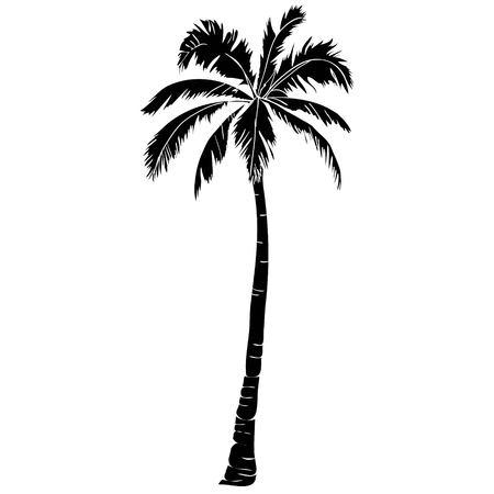 Icona di palma Archivio Fotografico - 88887647