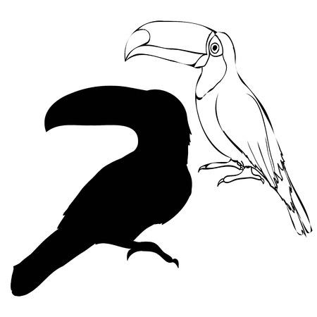 Toucan bird Illustration