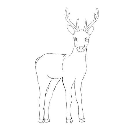 Deer sketch Illustration