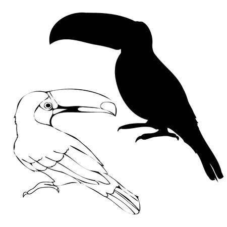 Toucan with silhouette