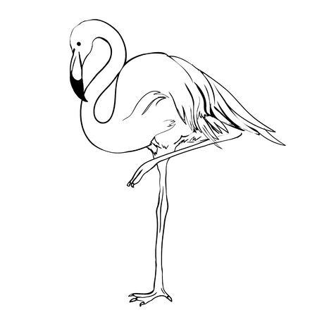 Ilustración de vector de Flamingo. Estilo Doodle Aislado en el fondo blanco. Flamenco mano dibujar. Paño, impresión, diseño, icono, logotipo, cartel, materia textil, papel, tarjeta, paño, envoltura, papel pintado.