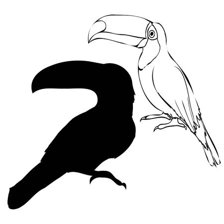 toucan, silhouette, vector, bird, black, illustration, animal, art, feather, isolated, nature, sign, tropical, white, wing, zoo, icon, abstract, cartoon, design, graphic, symbol, brazil decoration freedom object shape style background image wild wildlife amazonian concept creative decorative eco fauna flight fly jungle leaf life natural ornament pattern peace beak drawing fun