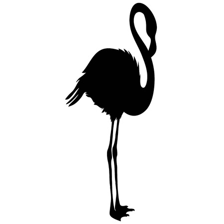 Flamingo silhouette, vector, illustration bird black tropical Reklamní fotografie