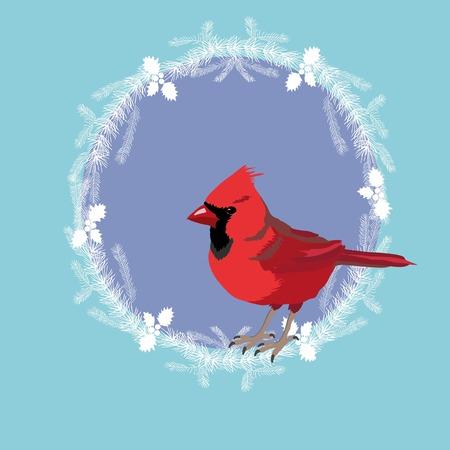 Northern Cardinal, Illustration