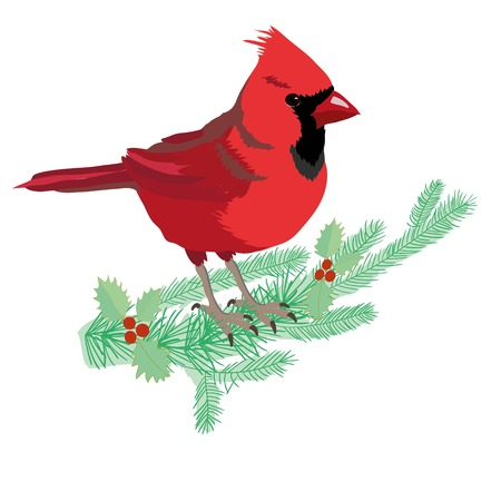 Northern Cardinal on a branch isolated cartoon illustration Illustration