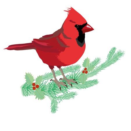 Northern Cardinal on a branch isolated cartoon illustration Illustration