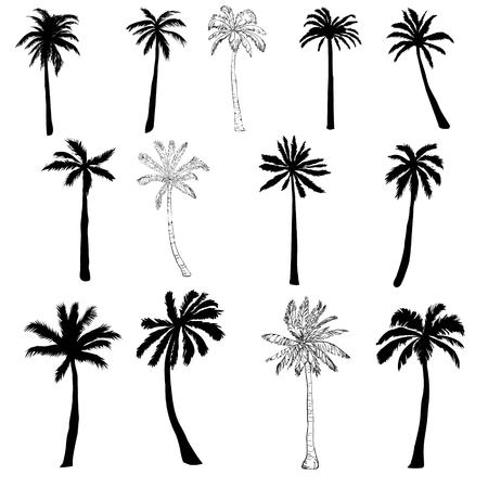 Vector palm tree silhouette icons on white background. Çizim