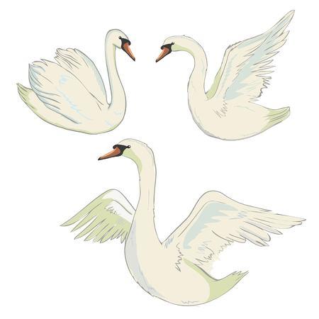 ベクトルシンボル動物美鳥描き優雅イラスト 孤立した自然シルエットワイルド