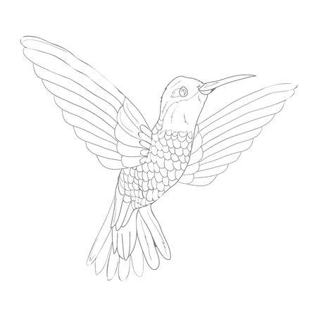 배경에 고립 된 조류 벡터 스케치 아이콘입니다. 손으로 그린 조류 아이콘입니다.