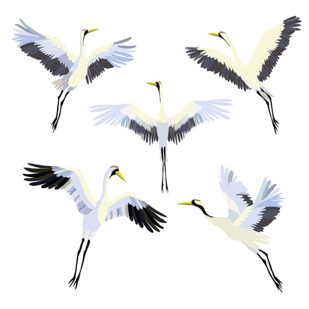Vector watercolor set of illustrations bird crane. White stork . Vettoriali