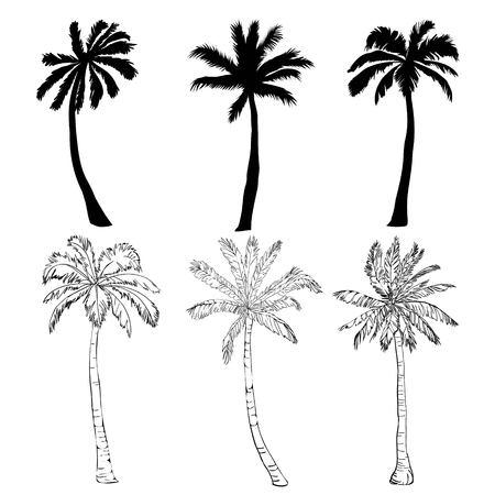 白い背景にベクトルヤシの木のシルエットアイコン, ブランチ, 気候, 環境, エキゾチック, フローラ, 花, ハワイ, アイコン, イラスト島の葉の自然屋