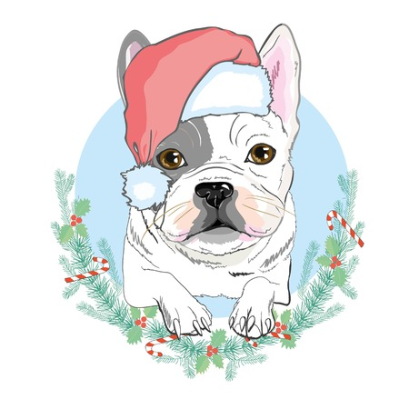 Portrait of cute french bulldog in red christmas hat on blue background. Vector illustration. Santa Claus. New Years and Christmas. Illustration