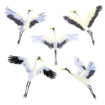 Vector watercolor set of illustrations bird crane. White stork . Фото со стока