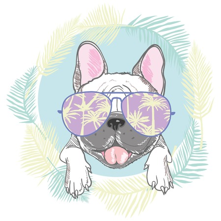 French bulldog head isolated on white background. Vector illustration 스톡 콘텐츠