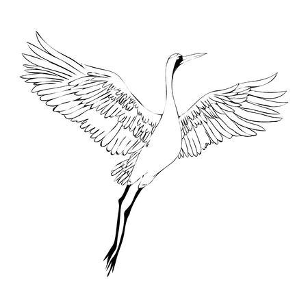 ●ベクトル水彩画のイラストバードクレーン。白いコウノトリ.分離オブジェクト
