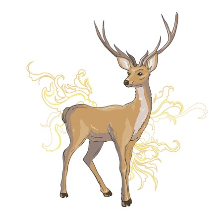 A set of deer for your design. Deer, sika deer and reindeer. Vector illustration, isolation objects. Illustration