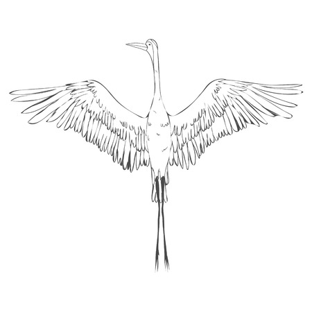 Vector of illustrations bird crane. White stork. Isolated object Ilustração