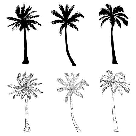 Vector Palmeschattenbildikonen auf weißem Hintergrund, Niederlassung, Klima, die Umwelt, exotisch, Flora, Blumen, Hawaii, Ikone, Paradiesparadiesanlage der Illustrationsinselblattnatur im Freien