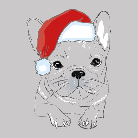 Portrait of cute french bulldog in red christmas hat on blue background. Vector illustration.