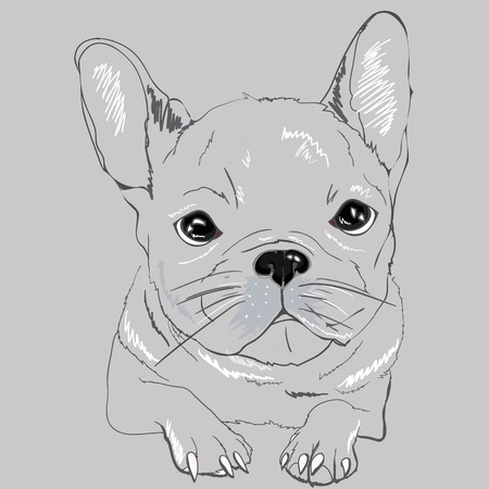 Cute Black & White French Bulldog for T Shirt