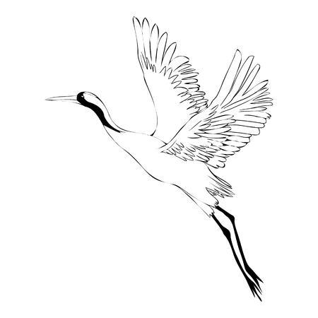 Vector of illustrations bird crane. White stork . isolated object Stock Illustratie