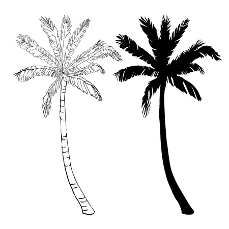 Vector palm tree silhouette icons on white background, branch, climate, environment, exotic, flora, floral, hawaii, icon, illustration island leaf nature outdoor paradise plant Banco de Imagens - 93011365