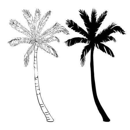 Vector palmeira silhueta ícones no fundo branco, ramo, clima, ambiente, exótico, flora, floral, havaí, ícone, ilustração, ilha, folha, natureza, ao ar livre, paraíso, planta Foto de archivo - 93011365