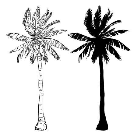 Vector Palmeschattenbildikonen auf weißem Hintergrund, Niederlassung, Klima, die Umwelt, exotisch, Flora, Blumen, Hawaii, Ikone, Paradiesparadiesanlage der Illustrationsinselblattnatur im Freien Vektorgrafik
